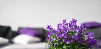 Jaki kolor pasuje do fioletu?